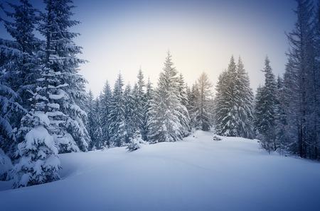 montañas nevadas: Invierno en el bosque. Nueva Year`s paisaje. Nieve fresca en los árboles. El efecto de tintado de color