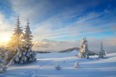 겨울 산에서. 화창한 아침에 크리스마스 풍경입니다. Carpathians, 우크라이나, 유럽