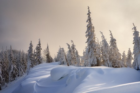 snowdrifts: Winter forest covered with snow. New Year`s landscape. Fabulous trees in snowdrifts. Carpathian mountains, Ukraine, Europe Stock Photo