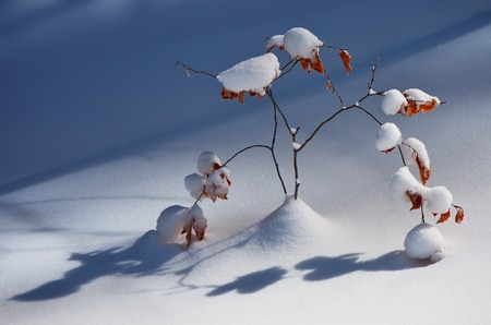 Winter landscape in the forest. Young tree under snow photo