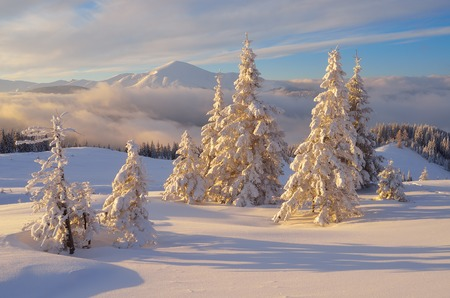 Fabulous Christmas landscape. Fir trees under the snow. Beautiful winter mountains photo