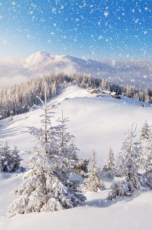 Winter landscape with the village of shepherds in a mountain valley. Trees in snowdrifts. Carpathian mountains, Ukraine, Europe. View of Mount Petros
