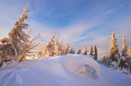 snowdrifts: Winter forest in mountains. Snowdrifts. Evening landscape Stock Photo