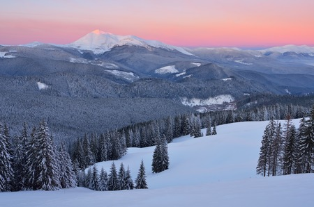 Dawn in mountains. Winter landscape with snow covered forest photo