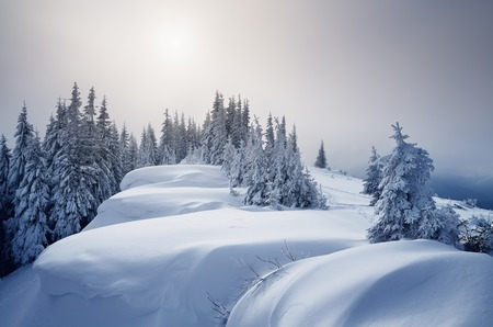 Winter forest covered with snow. New Year`s landscape. Fabulous trees in snowdrifts. Sunlight through the mist. Carpathian mountains, Ukraine, Europe photo