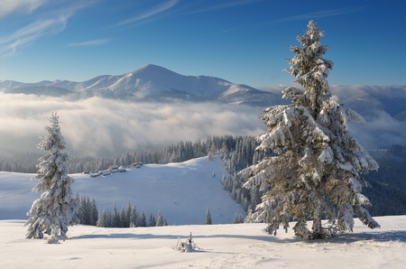 Winter landscape in the mountains. Sunny frosty morning. Carpathians, Ukraine. Christmas view Archivio Fotografico