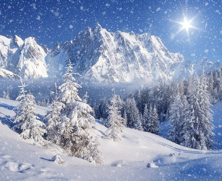 christmas scenery: Christmas landscape. Spruce forest in winter Stock Photo