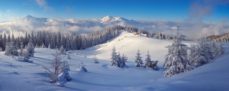 Winter forest in mountains. Snow on the trees. Christmas landscape