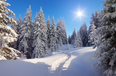Forest landscape in the winter. The trail in the snow. Christmas view