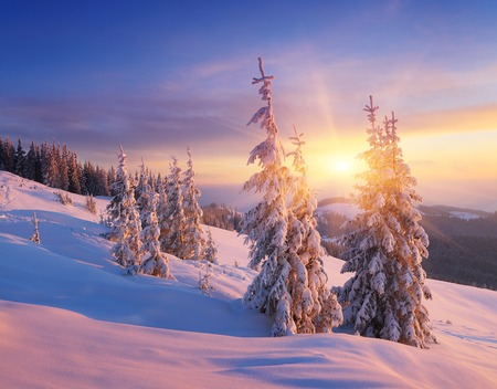 Christmas landscape. Spruce forest in winter. Beautiful light at sunset Archivio Fotografico