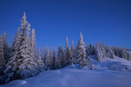 Winter landscape at dusk.Forest in snow
