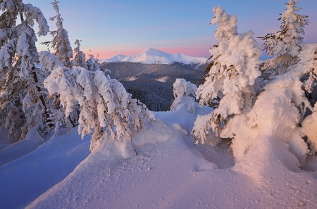 christmas landscape: Christmas landscape. Winter forest in mountains. Fir under the snow. Beautiful snowdrifts