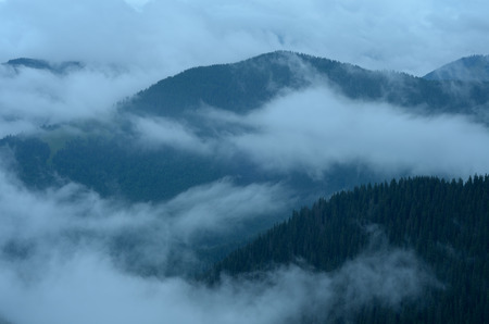 dampness: Beautiful fog in the mountains. Cloudy weather. Coniferous forest on the slopes