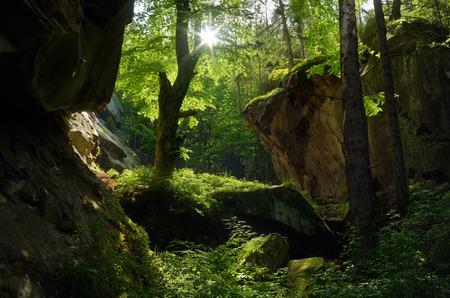 Sunny day. Beautiful fairy forest. Springtime Stock Photo