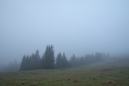 dampness: Morning landscape. Autumn mist in a mountain valley