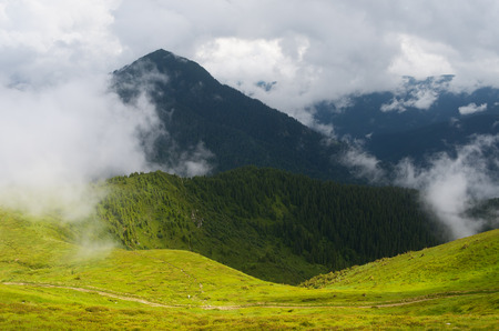 shroud: Summer landscape in the mountains. Clouds shroud the summit. Beauty in nature