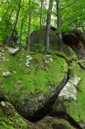 dreamlike: Forest with covered with moss stones. Dreamlike. Beauty in nature