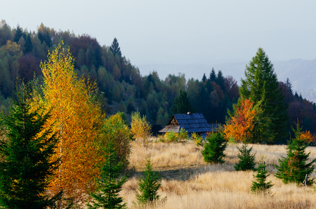 trees forest: Autumn landscape in the village. Mountains Carpathians, Ukraine, Europe