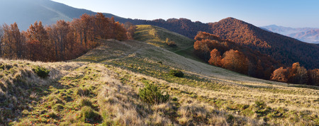 forest background: Morning landscape in the autumn. The mountain panorama with the road in the dry grass. Carpathians, Ukraine, Europe
