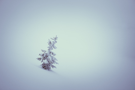 snow tree: Lonely spruce in the snow. Winter Fairy Tale. Color toning. Low contrast