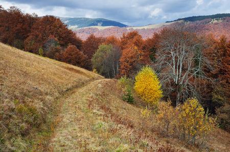 Route dans la forêt de montagne. Paysage d'automne
