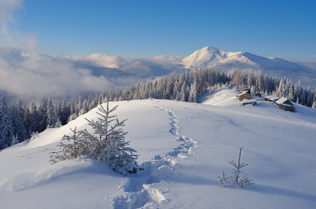 snow forest: Mountain village of shepherds. Winter landscape. The path in the snow. Sunny day. Christmas look. Carpathians, Ukraine, Europe