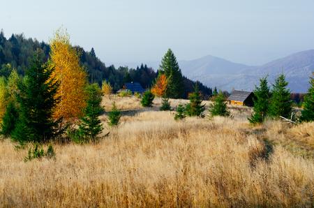 forest trees: Autumn landscape. Old abandoned village in the mountains. Carpathians, Ukraine, Europe Stock Photo