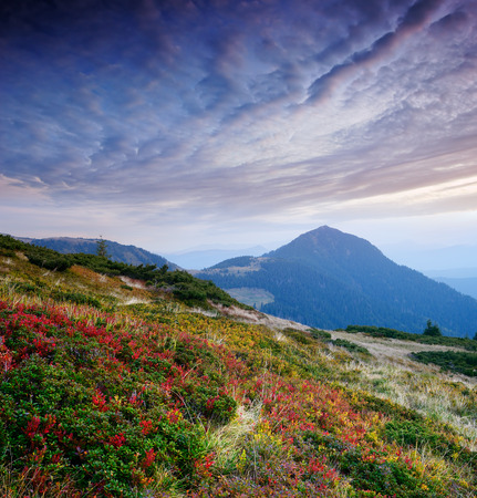 blueberry bushes: Morning landscape in the mountains. The beginning of autumn. Blueberry bushes on the slopes