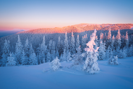 snow  snowy: Snowy winter in mountains. Frosty morning. Fir forest under snow. Beauty in nature Stock Photo