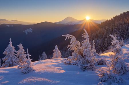 abetos: paisaje de invierno. Salida del sol en las montañas. Mundo hermoso. Escena de la Navidad. Cárpatos, Ucrania, Europa