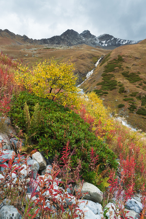 caucas: Autumn landscape in the mountains. Beautiful trees and bushes on the hillside. Caucasus, Georgia, Zemo Svaneti