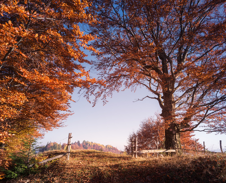 art processing: Autumn landscape in countryside. Wooden fence and gates. Road in beech forest. Sunny weather in the evening. Carpathian, Ukraine, Europe. Art processing of photos. HDR and color toning
