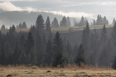 art processing: Fir forest on the slopes of the mountains. Autumn Landscape with haze. The light of the morning sun. Karpaty, Ukraine, Europe. Art processing of photos. Color toning and low contrast