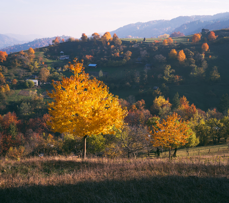 art processing: Autumn landscape in mountain village. Sunny weather in the evening. Beautiful cherry tree with yellow and orange leaves. Carpathian, Ukraine, Europe. Art processing of photos. Color toning Stock Photo