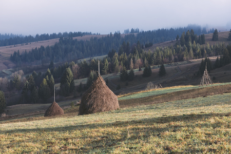 art processing: Autumn landscape in the mountains. Field with stacks of dry hay for cattle. Sunny morning. Fir forest on the slopes. Karpaty, Ukraine, Europe. Art processing of photos. Color toning and low contrast
