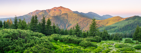 Panorama of mountains with fir forest. Summer landscape at dawn. Carpathians, Ukraine, Europe