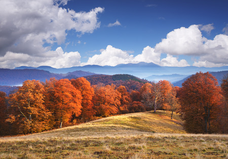 art processing: Autumn landscape in the mountains. Beech forest on the hills. Sunny weather with blue sky and cumulus clouds. Art processing photos