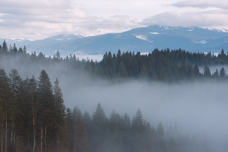 art processing: Mountain landscape in winter. Fir forest and fog. Cloudy day. Carpathian Ukraine, Europe. Art processing of photos. Low contrast and color toning