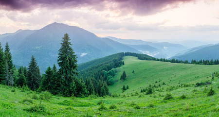 art processing: Panorama of mountains with fir forest. Summer landscape at dawn. Carpathians, Ukraine, Europe. Art processing of photos. Color toning