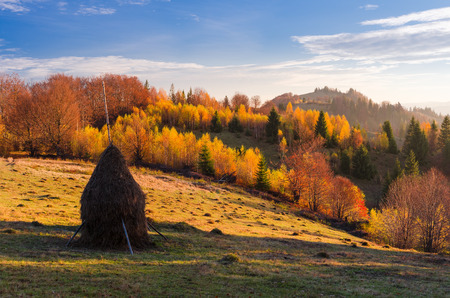 beautiful weather: Autumn landscape in sunny weather. Haystack on the meadow in a mountain village. Birch forest with beautiful leaves. Carpathians, Ukraine, Europe