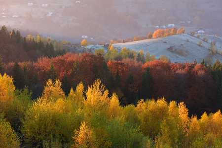 beautiful weather: Autumn landscape with a beautiful deciduous forest in the mountains. Sunny weather in the morning. Carpathians, Ukraine, Europe