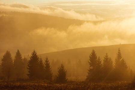 autumn color: Autumn landscape with a fir forest in the mountains. Dawn with fog and sun. Color toning Stock Photo