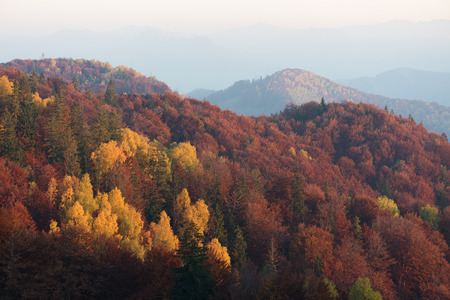 yellow trees: Beautiful autumn trees on the mountain slopes. Deciduous forest with red and yellow leaves. Morning haze Stock Photo