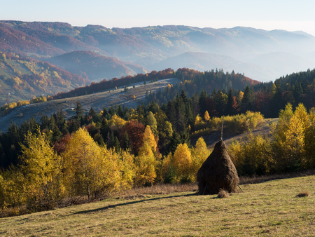 rural landscape: Rural landscape in autumn. Making hay for the winter. Haystacks on a mountain meadow. Sunny morning in the village. Carpathians, Ukraine, Europe