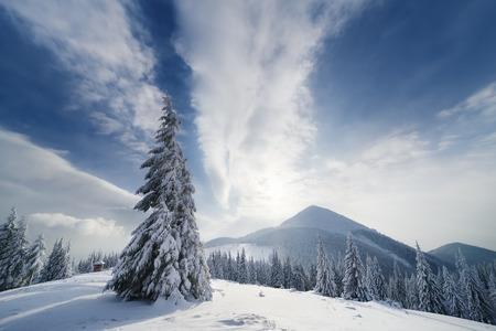 Christmas landscape with fir tree in the snow. Beautiful clouds and mountain peak. Carpathians, Ukraine, Europe Stock Photo