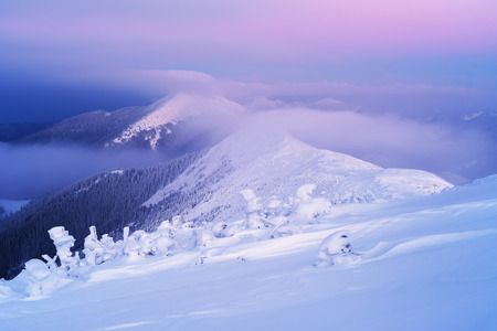 sunrise mountain: Winter landscape at dawn. Mountain tops in fog and clouds. Very cold morning. Carpathians, Ukraine, Europe