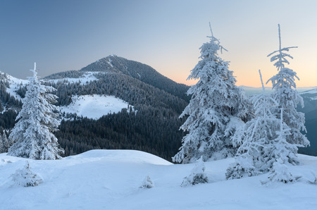 Winter landscape in the mountains. Fir trees and forest on the slopes. Morning twilight before dawn. Carpathians, Ukraine, Europe Stock Photo
