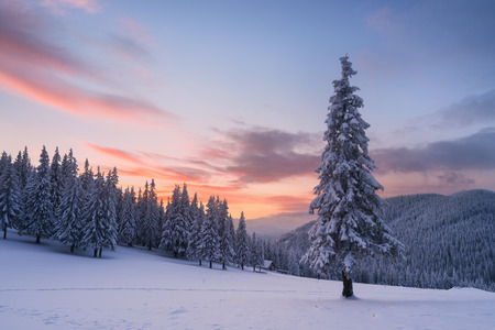 Christmas view. Winter landscape with fir trees in the snow. The wooden house in a mountain forest. Beautiful fabulous evening. Carpathians, Ukraine, Europe Archivio Fotografico