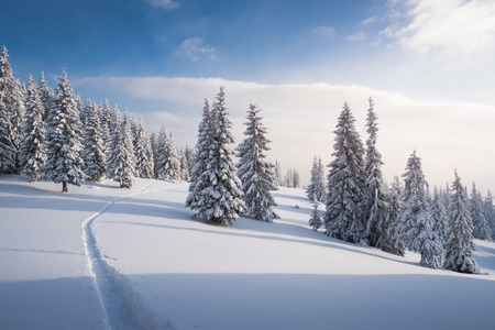 winter weather: Winter forest in snow. Mountain landscape with a footpath. Sunny day and frosty weather