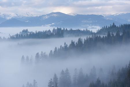 冬の山の風景。モミの森と霧。曇りの日。カルパチア ・ ウクライナ, ヨーロッパ